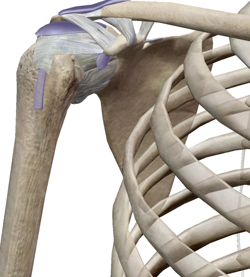 五十肩の一般的な原因